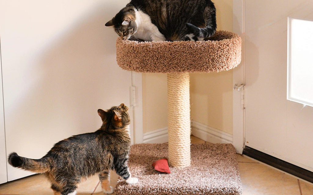 How to Choose a Cat Tree for Your Pet